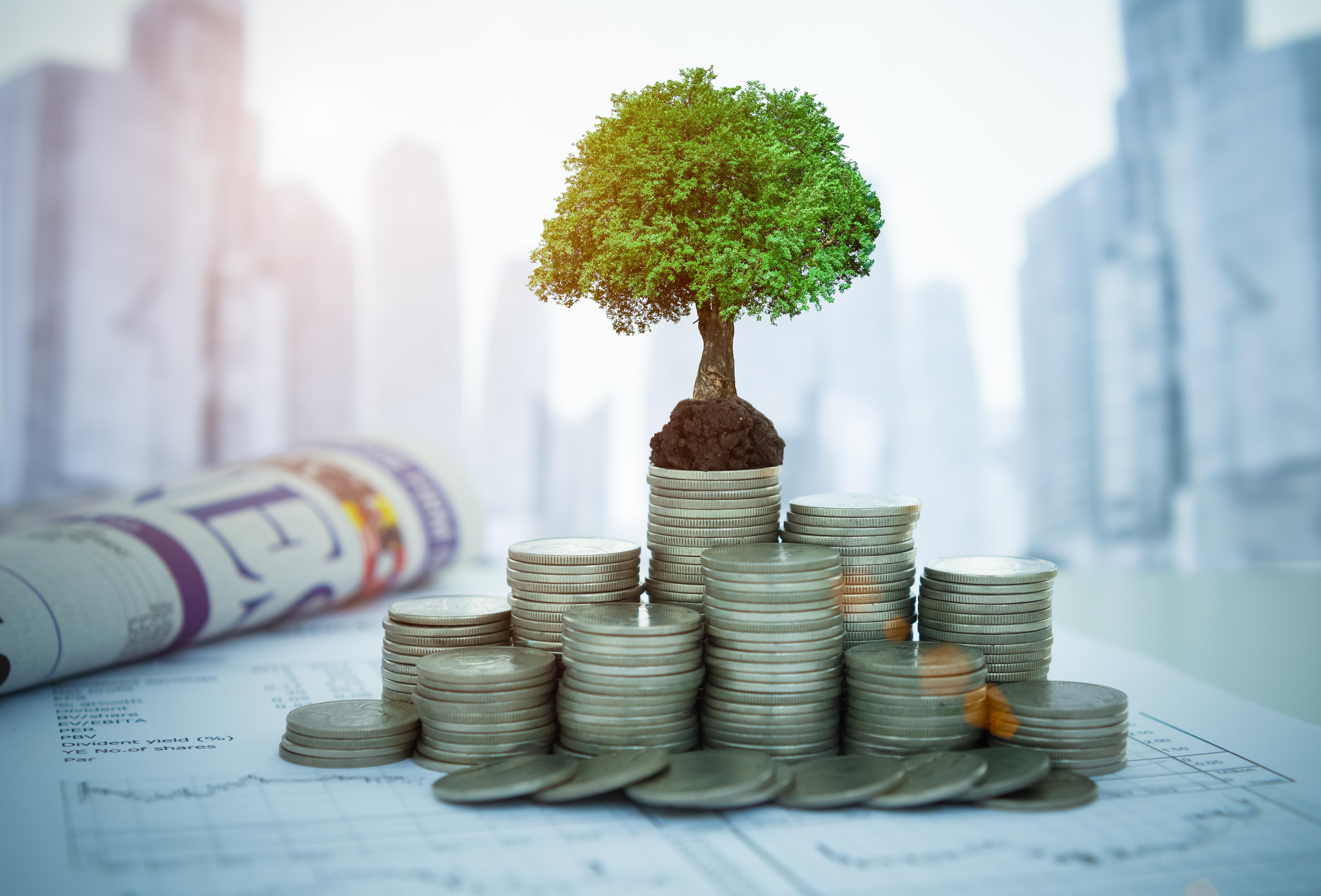 Tree growing on money